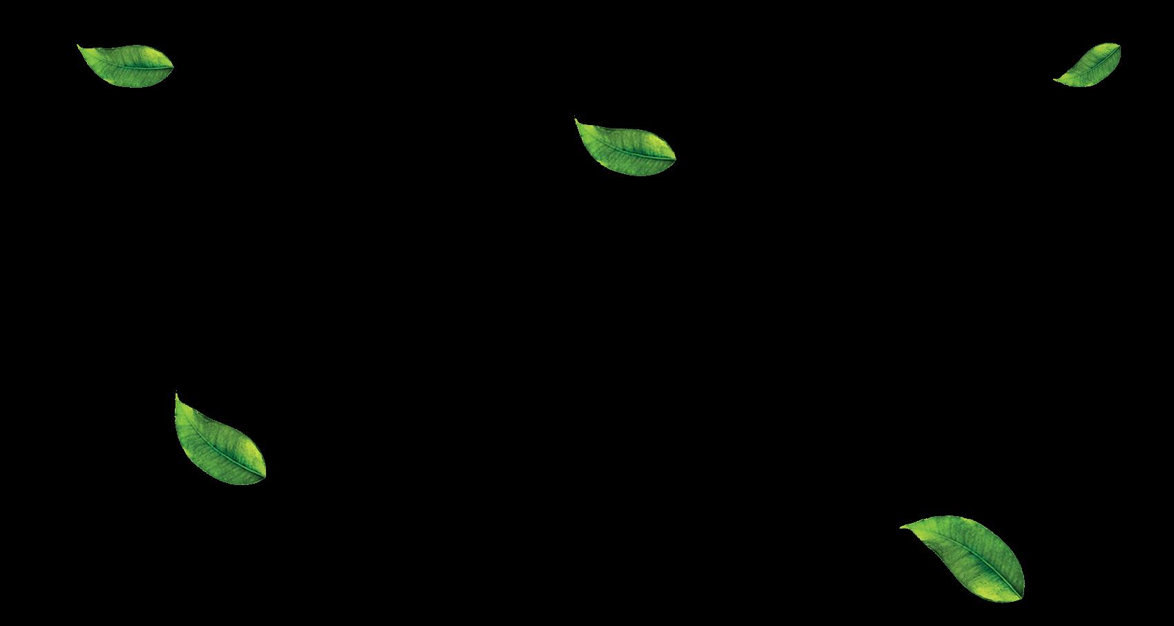 Enzo S Organic Matcha Green Tea Powder Free Shipping With