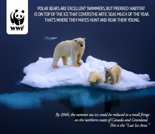 Polar Comfort Company Limited Helps Save Planet With Donation To Polar Bears For Every Travel Pillow Purchased